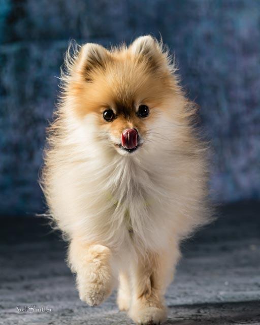 Web photo- Cowardly Canine- Zoey